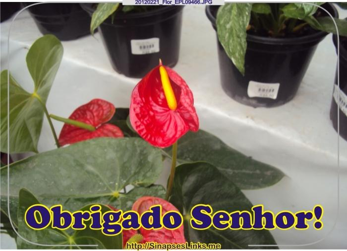 20120221_Flor_EPL09466