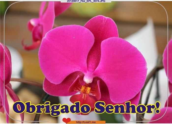 ccKp_20120617_Flor_EPL_3074