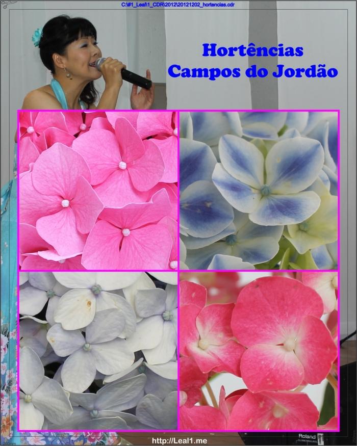 20121202_hortencias