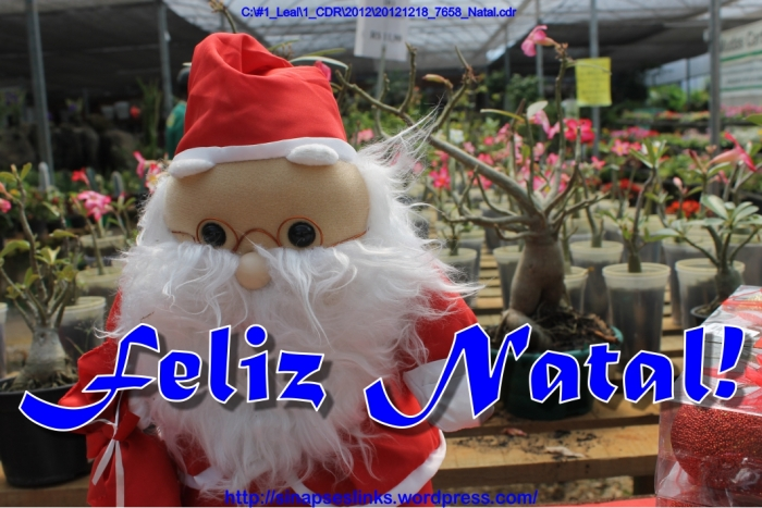 20121218_7658_Natal