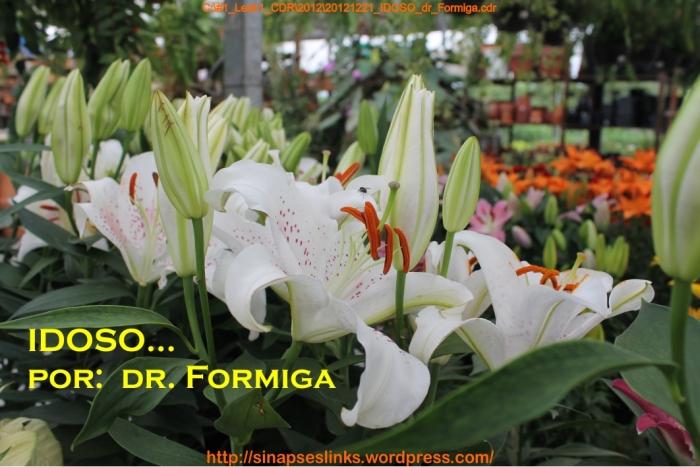 20121221_IDOSO_dr_Formiga