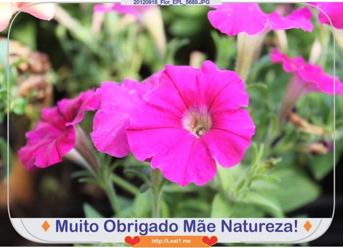ccUv_20120918_Flor_EPL_5689