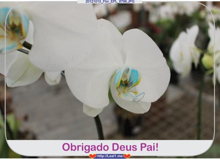 cdoO_20121013_Flor_EPL_6796