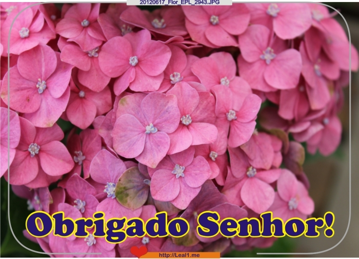 CDrD_20120617_Flor_EPL_2943