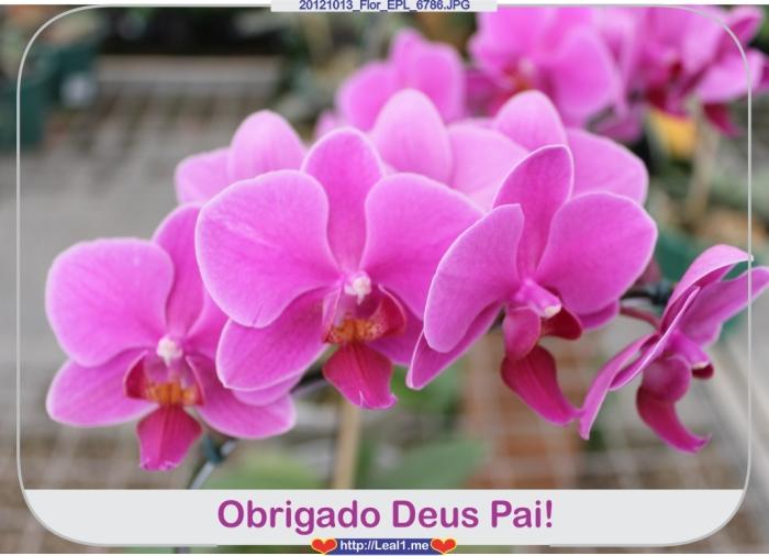 CEsq_20121013_Flor_EPL_6786
