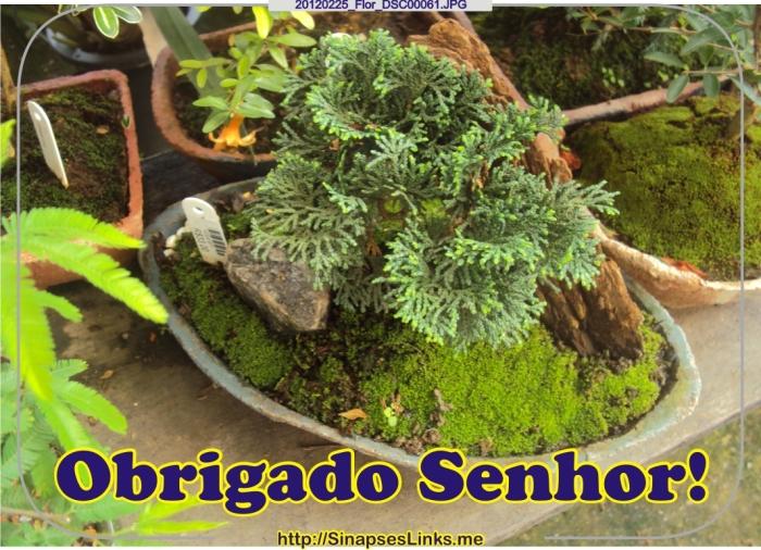 Cjnq_20120225_Flor_DSC00061