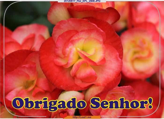 CKEu_20120617_Flor_EPL_2908