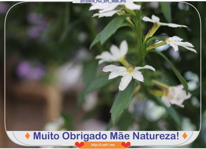 CMOS_20120918_Flor_EPL_5686
