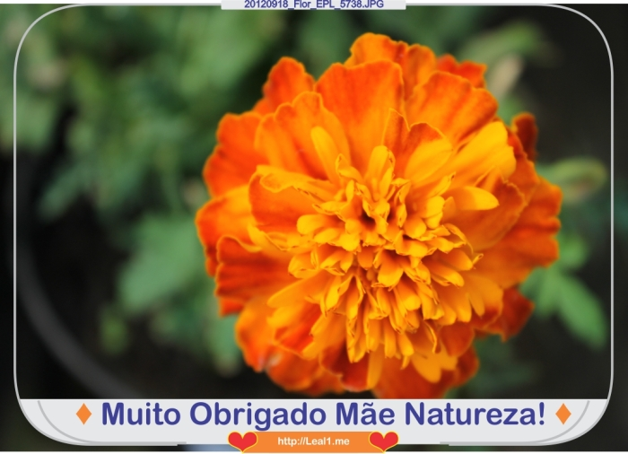 CoSO_20120918_Flor_EPL_5738