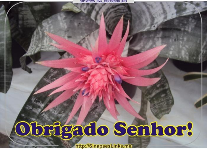 CShn_20120225_Flor_DSC00238