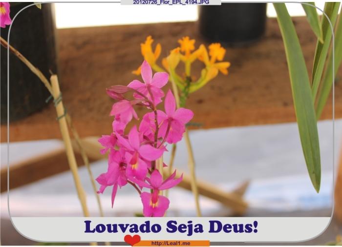 Csrq_20120726_Flor_EPL_4194