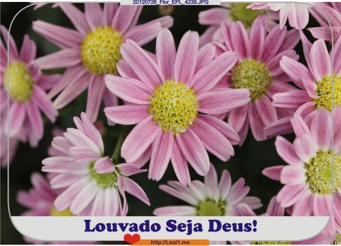 cTei_20120726_Flor_EPL_4238