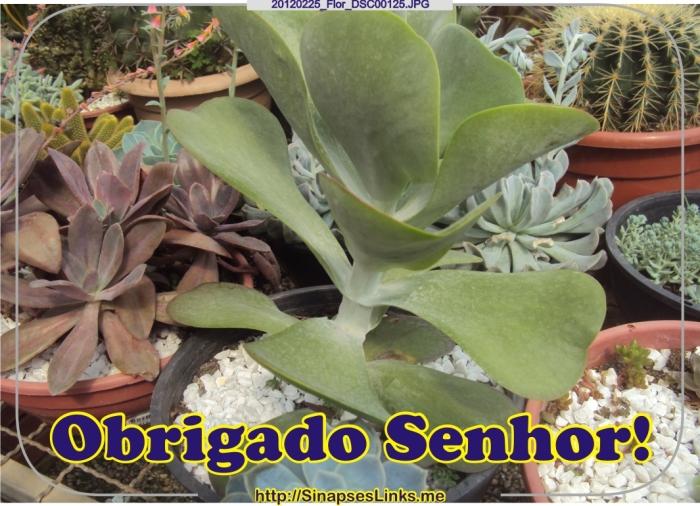 cTGw_20120225_Flor_DSC00125