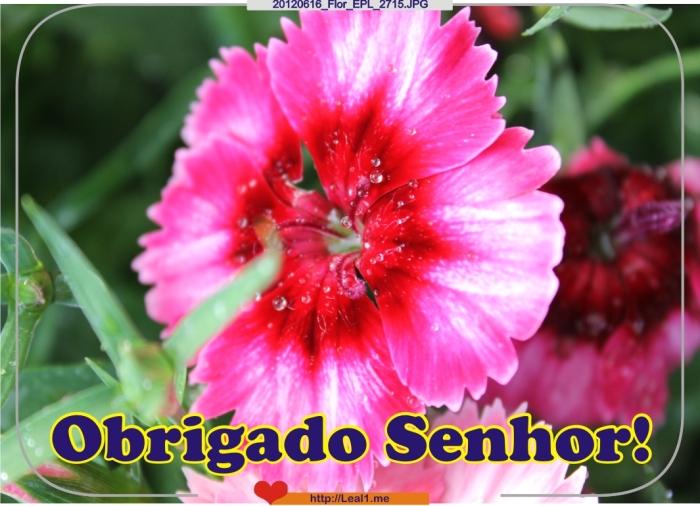 ctIH_20120616_Flor_EPL_2715