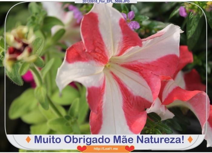 CTtS_20120918_Flor_EPL_5699