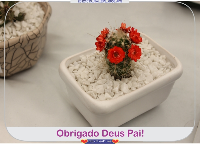 CUla_20121013_Flor_EPL_6858