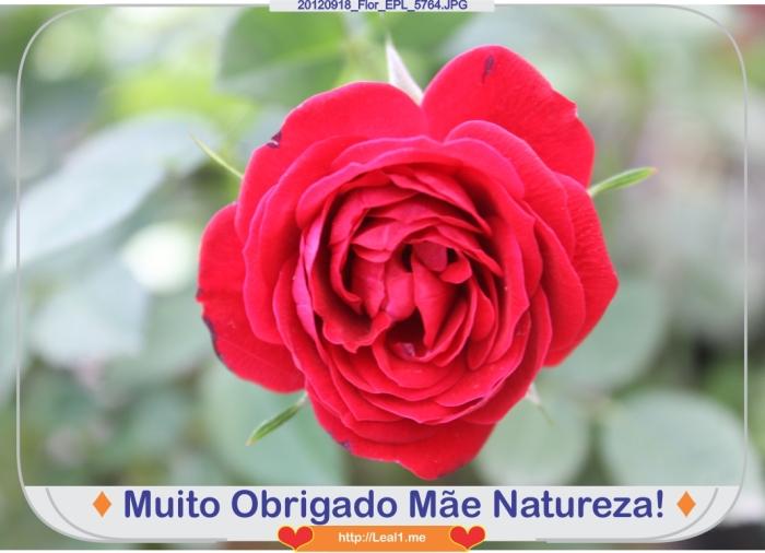 cVnM_20120918_Flor_EPL_5764