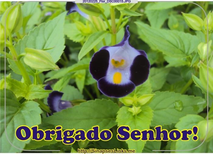dANB_20120225_Flor_DSC00015