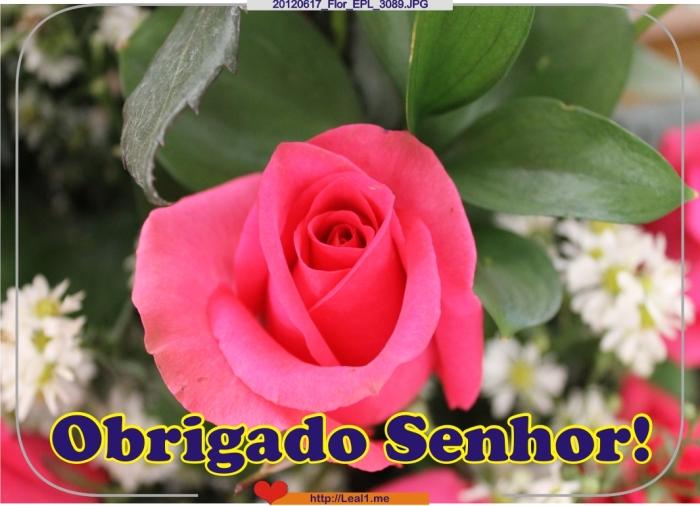 dBHc_20120617_Flor_EPL_3089
