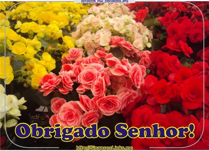 DCjg_20120225_Flor_DSC00203