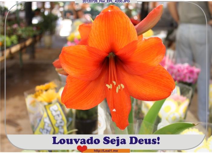 dHWx_20120726_Flor_EPL_4200