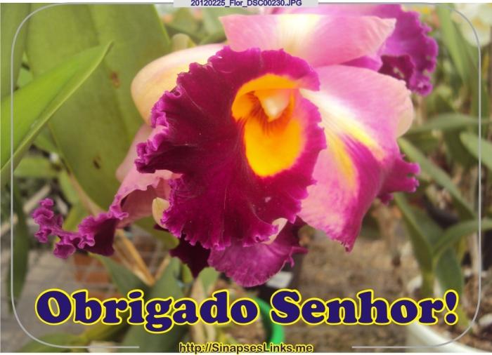 dkNr_20120225_Flor_DSC00230