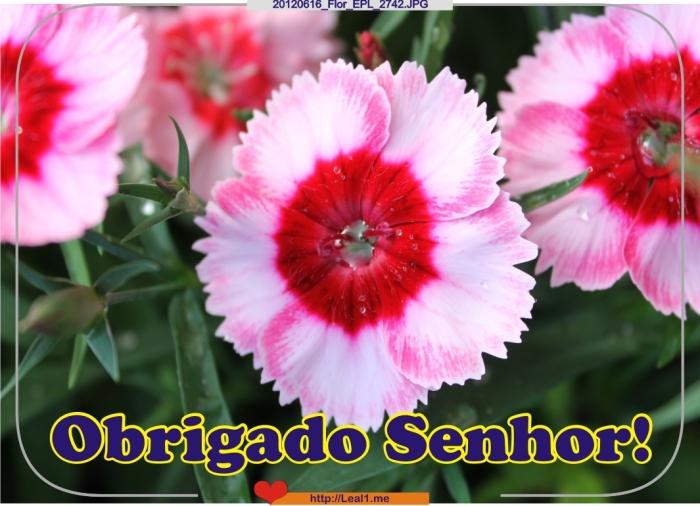dmGV_20120616_Flor_EPL_2742
