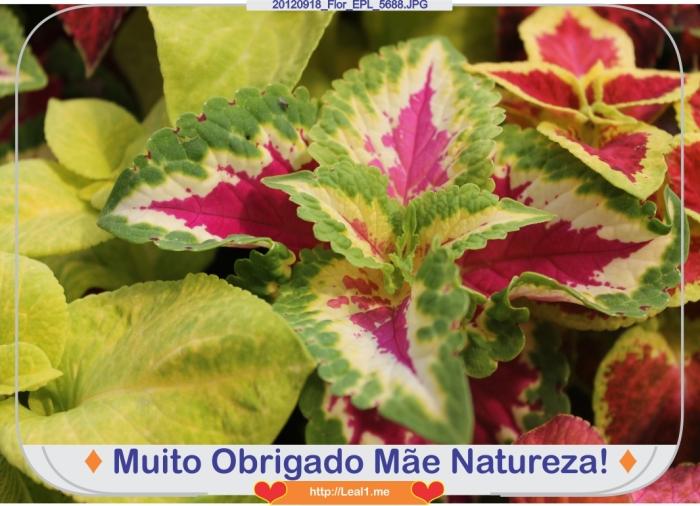 dmLC_20120918_Flor_EPL_5688