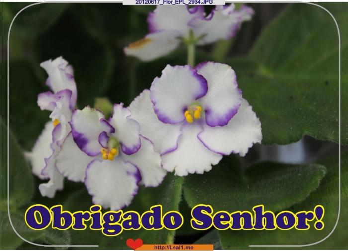 dRPJ_20120617_Flor_EPL_2934