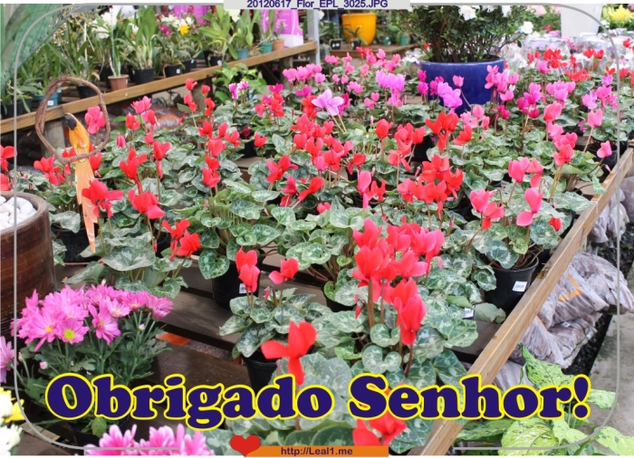 DSFd_20120617_Flor_EPL_3025