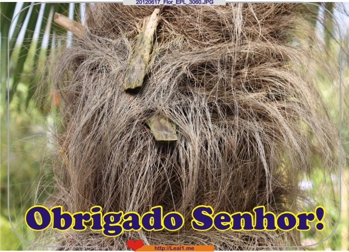 DtHp_20120617_Flor_EPL_3060