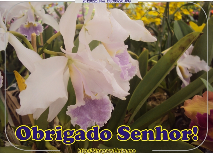 DVCN_20120225_Flor_DSC00226