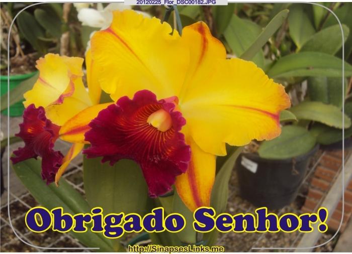 DWFc_20120225_Flor_DSC00182