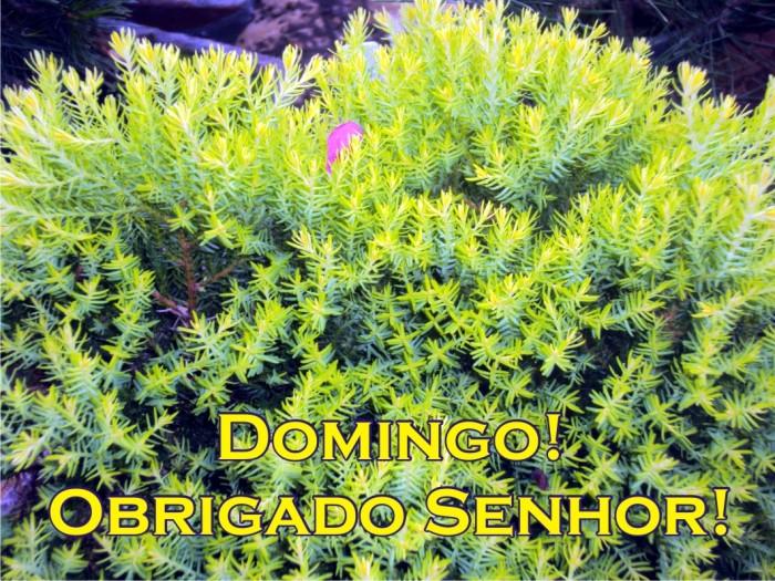 20130106_Domingo
