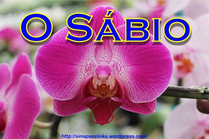 20130115_O_Sábio