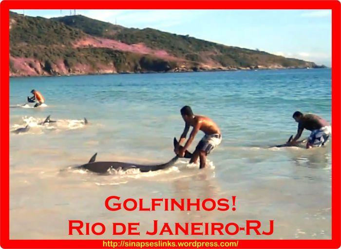 20130127_Golfinhos
