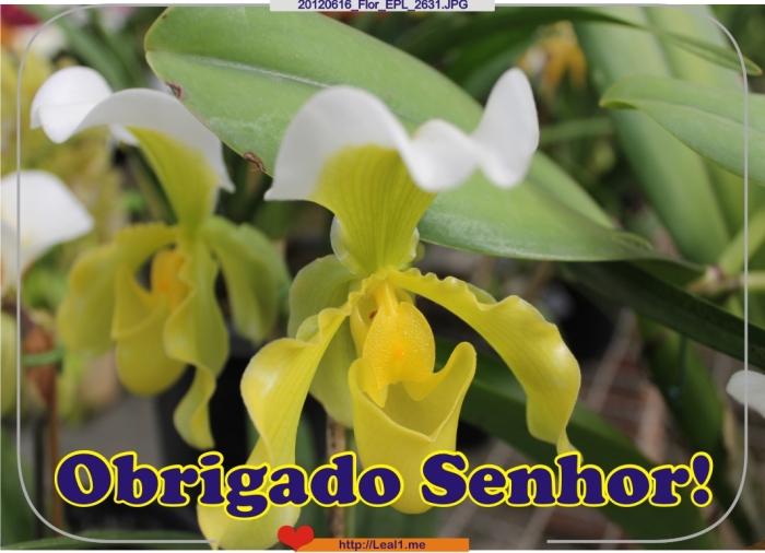 dWJf_20120616_Flor_EPL_2631