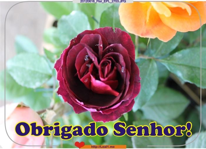 DWvp_20120616_Flor_EPL_2703