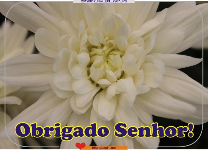 DyJC_20120617_Flor_EPL_2907