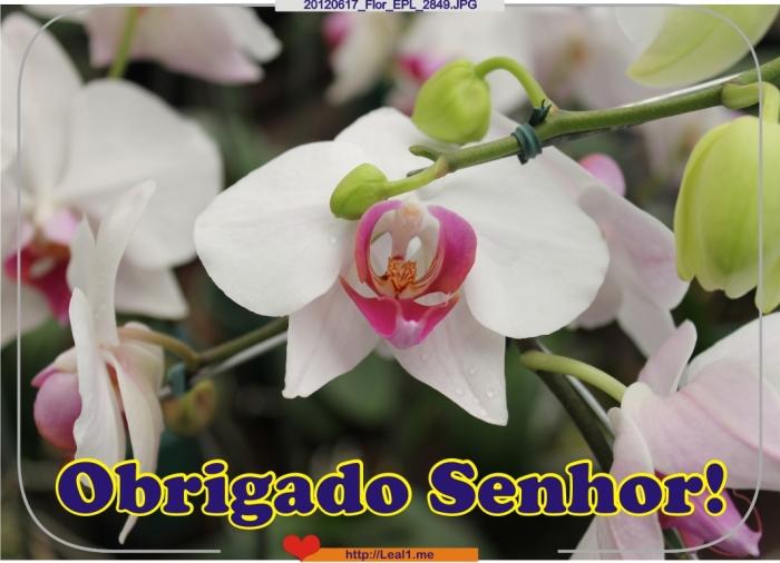 dYJQ_20120617_Flor_EPL_2849