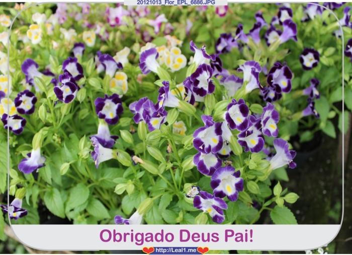 dzmP_20121013_Flor_EPL_6886