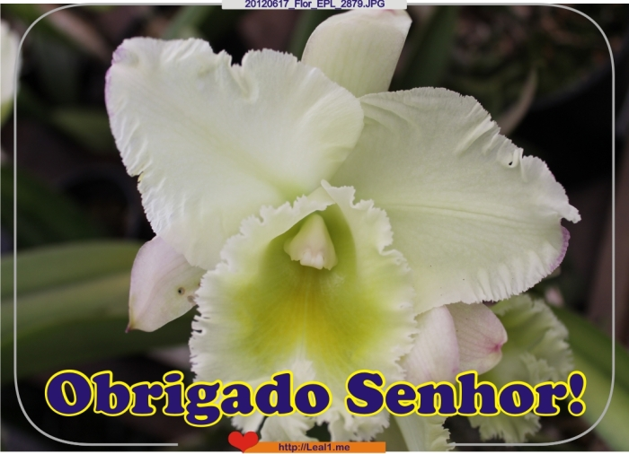 eacT_20120617_Flor_EPL_2879