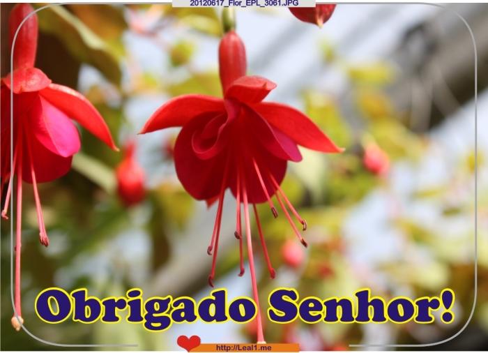 eAVD_20120617_Flor_EPL_3061
