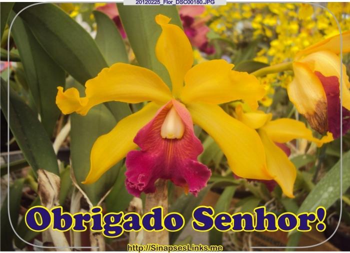 Ebih_20120225_Flor_DSC00180