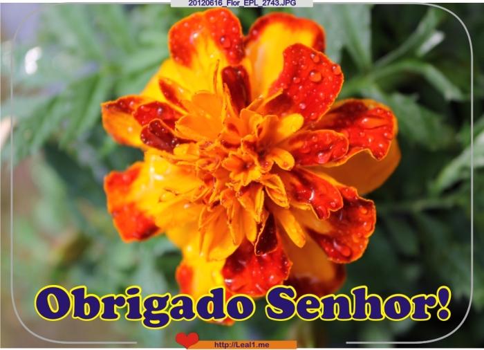 ebWB_20120616_Flor_EPL_2743