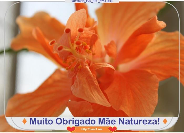 ECWy_20120918_Flor_EPL_5751