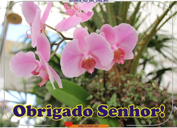 EFTq_20120616_Flor_EPL_2752