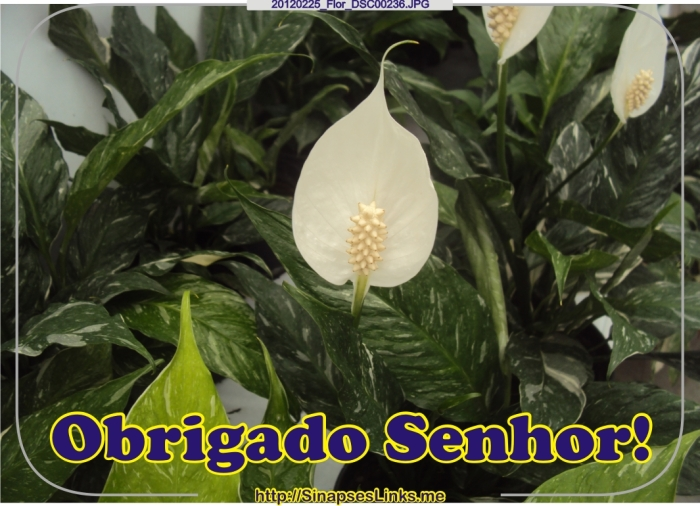 Egcg_20120225_Flor_DSC00236