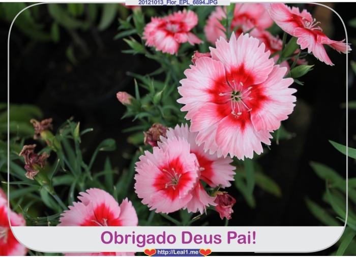 EjEL_20121013_Flor_EPL_6894