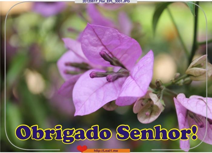 ekwl_20120617_Flor_EPL_3001